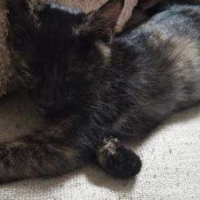 子猫と募金とふれあいマルシェ   リフォームショップ ハウジング・コバヤシ