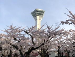 癒しの桜・・・・函館&北斗   リフォームショップ ハウジング・コバヤシ