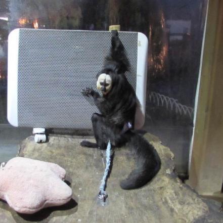 日本一危険な動物園~パパ!そっち行ったら○○されるって~