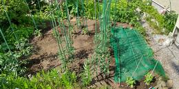 我が家の野菜たち リフォーム・リノベーション 函館